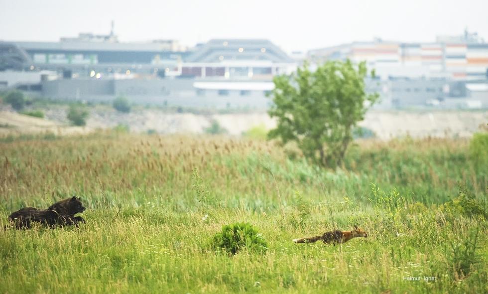 Scene de natură sălbatică