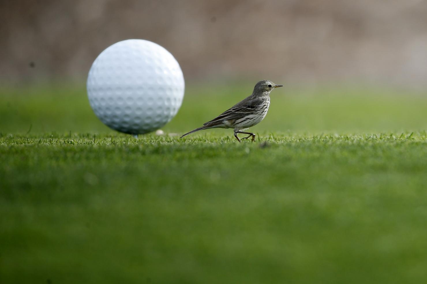 Turneu de golf