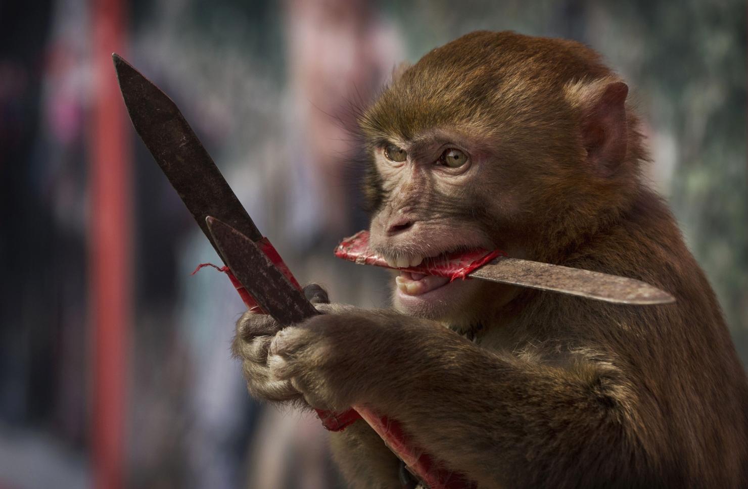 Anul maimuței