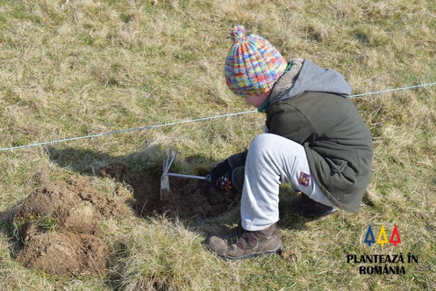 Plantează în România