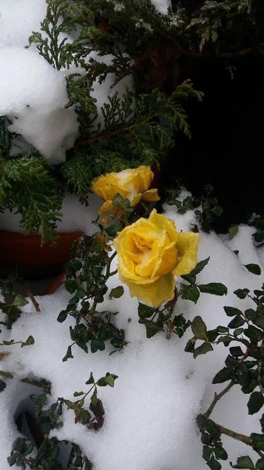 Imagine de iarnă
