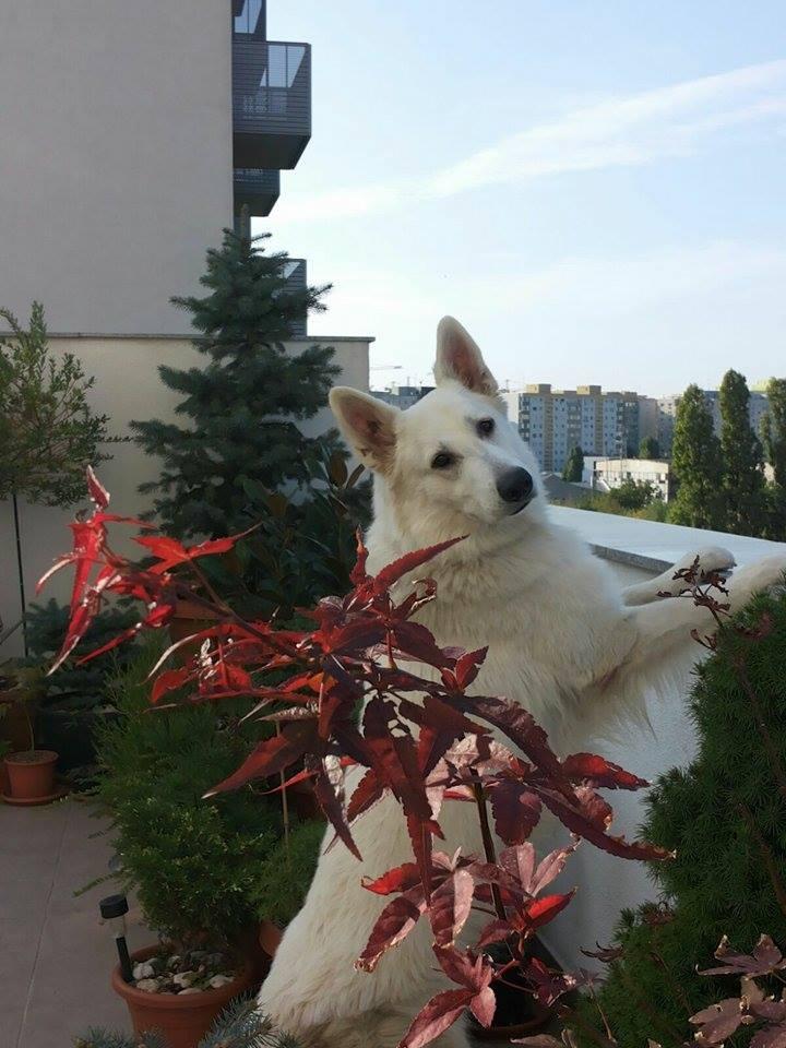Câinele Otto