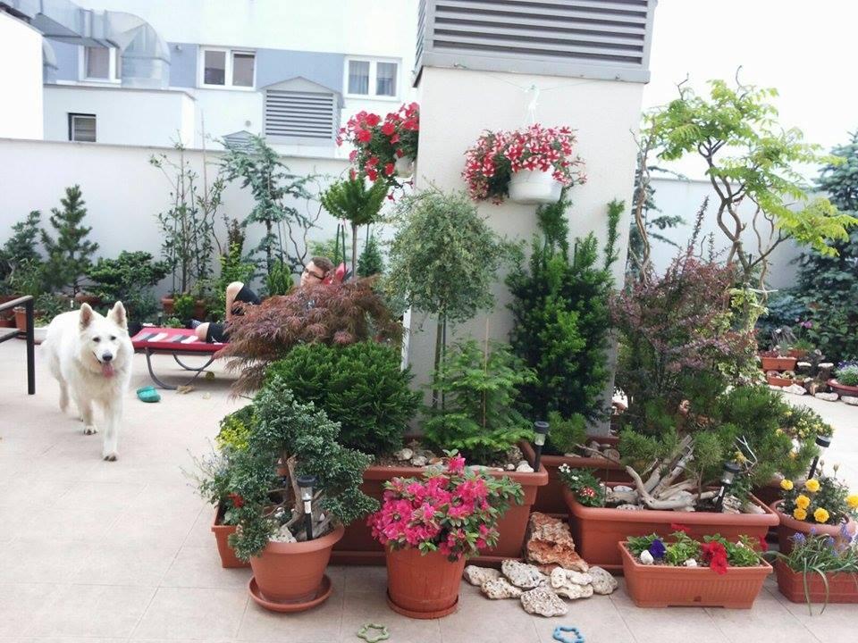 Grădina, vara