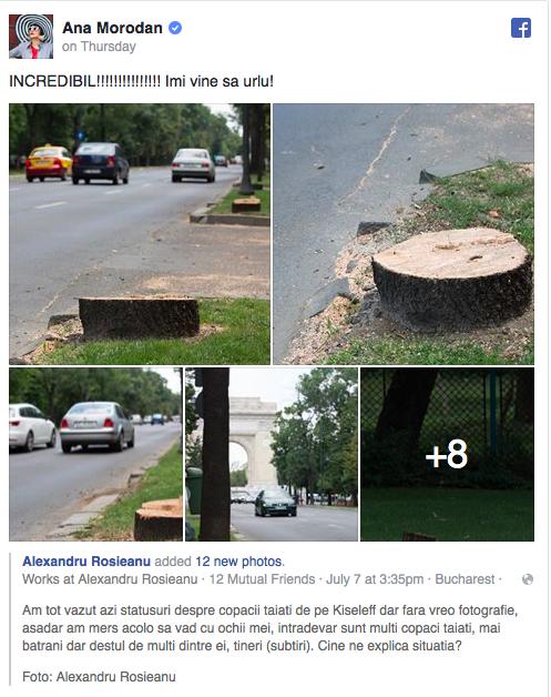 Copaci tăiați în București