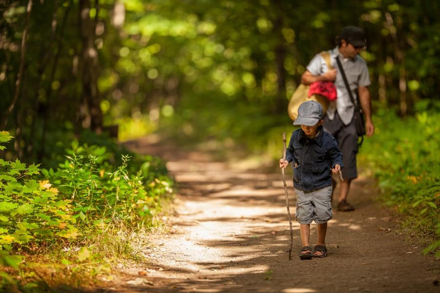 Drumeție în pădure