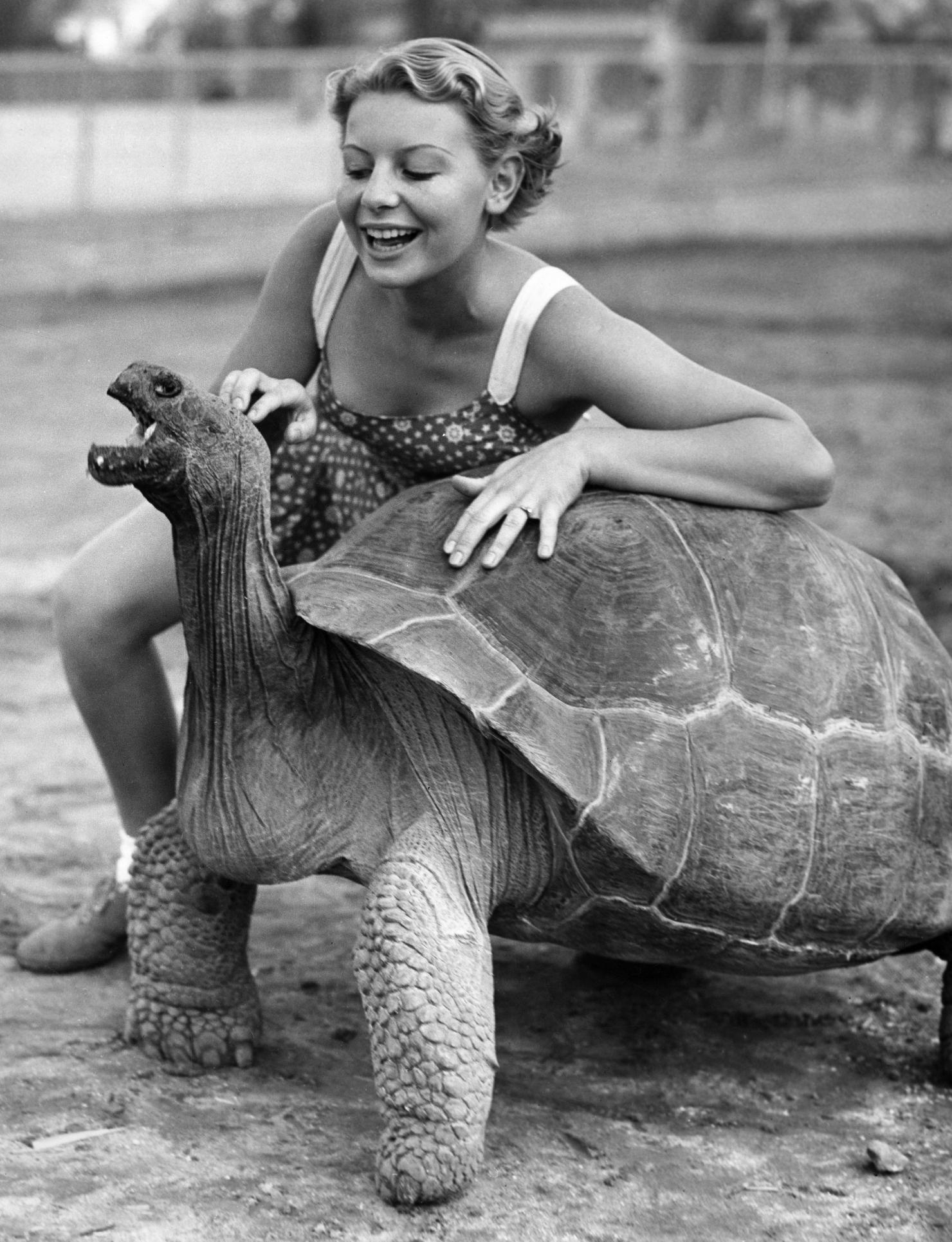 Diego, țestoasa care și-a salvat specia de la dispariție
