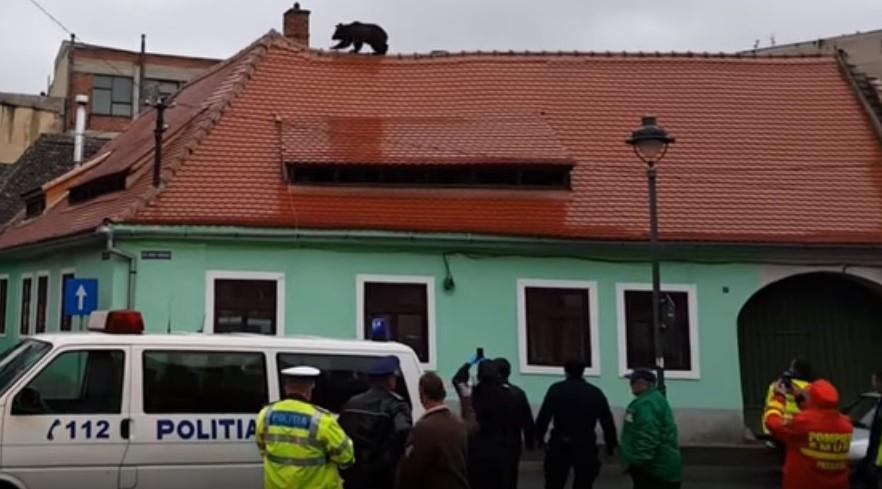 Ursul de la Sibiu