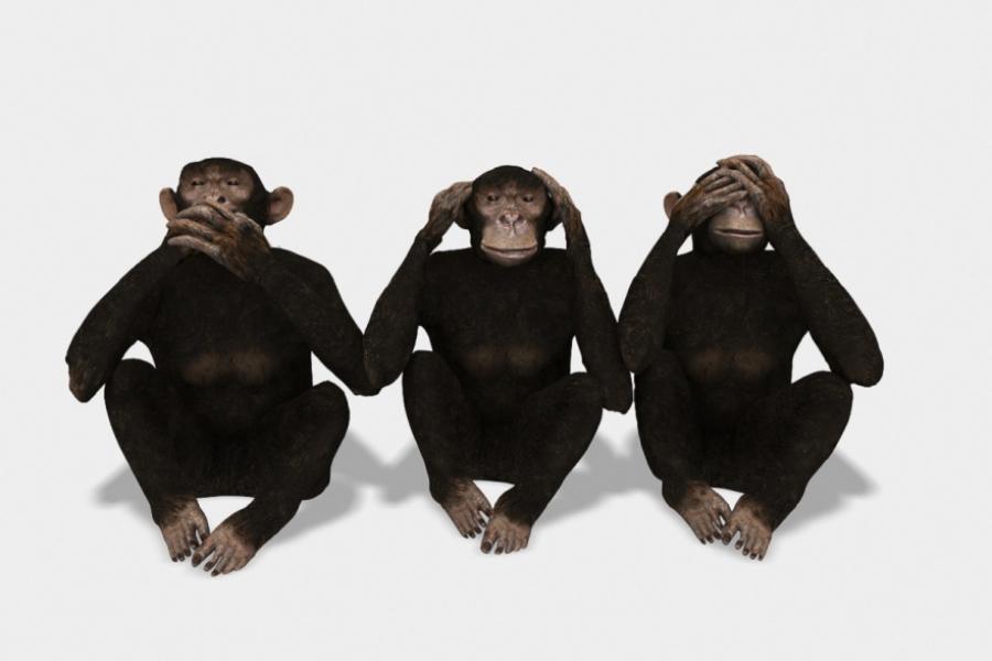 Trei maimuțe