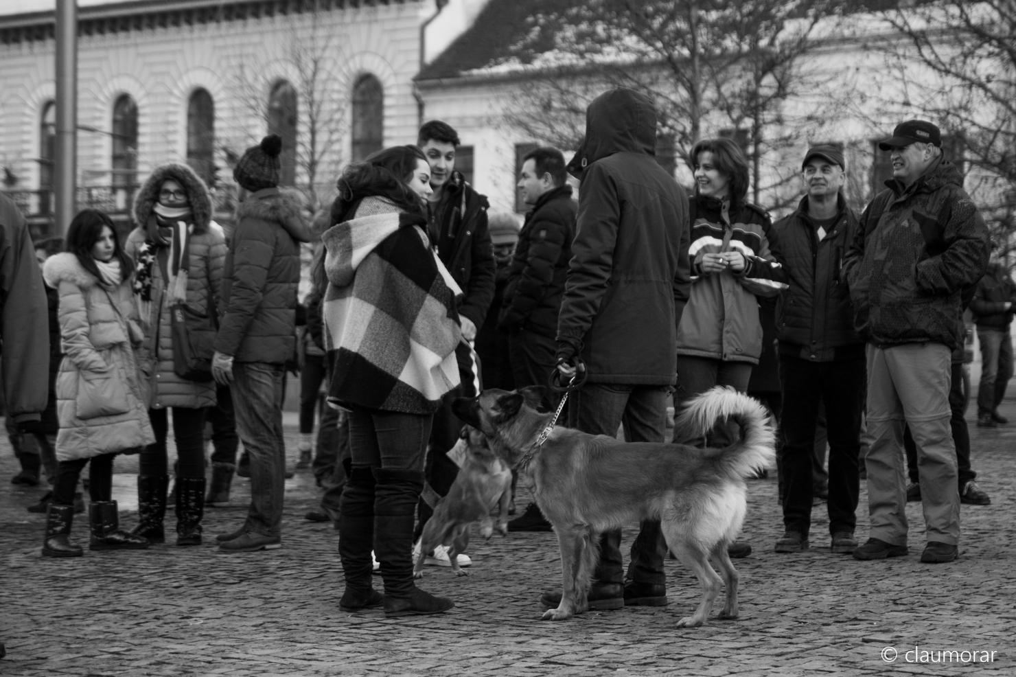 Protest la Cluj - 29 ianuarie