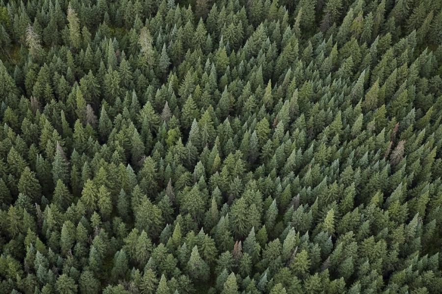 Pădure văzută de sus