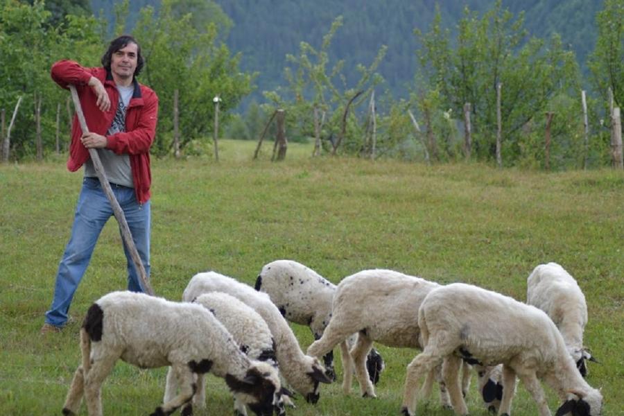 Mircea Cărtărescu și oile