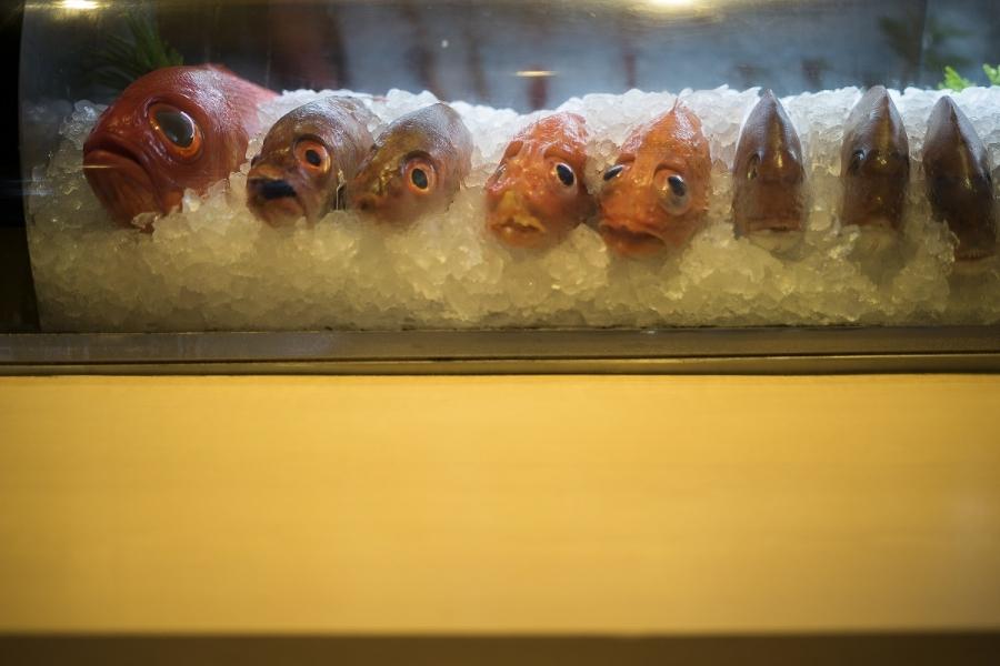 Pește la gheață
