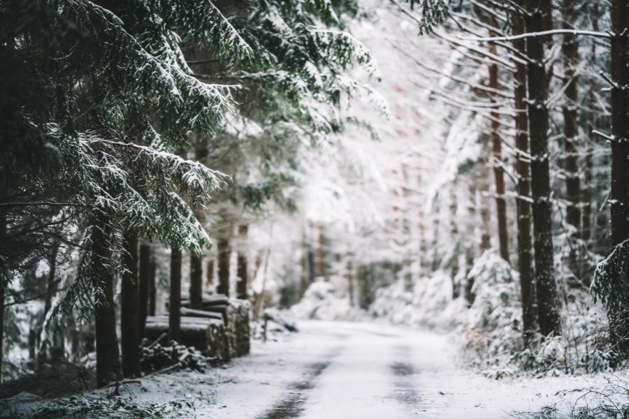 padure iarna - getty