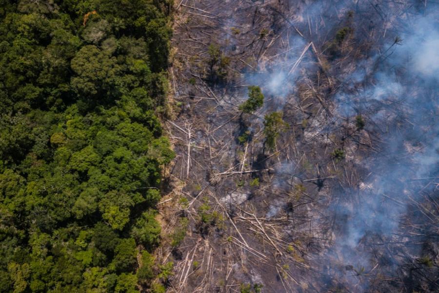 Pădure amazoniană