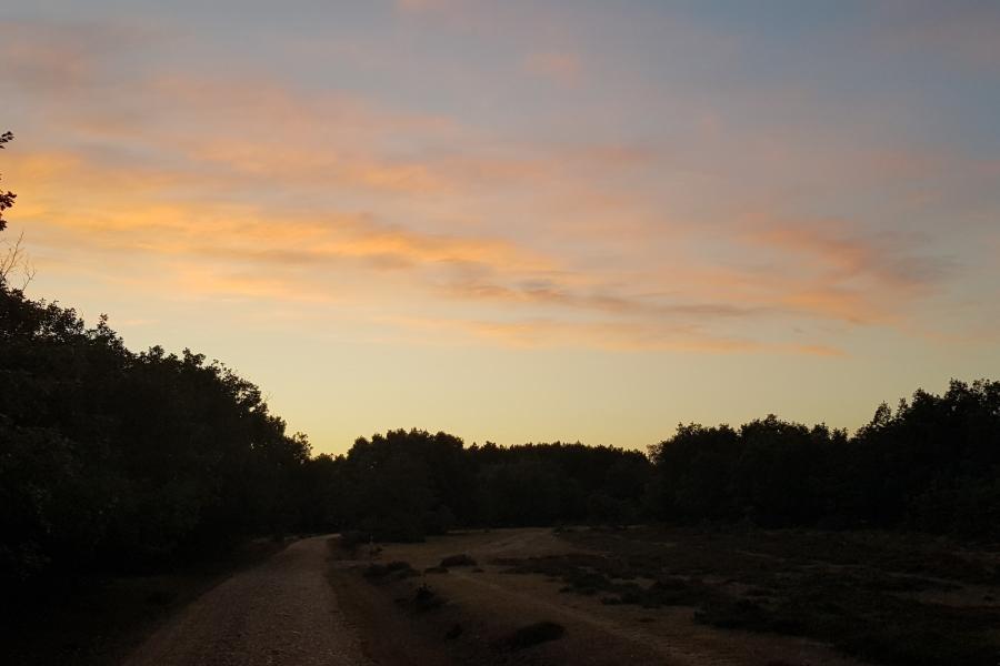 Camino - padure
