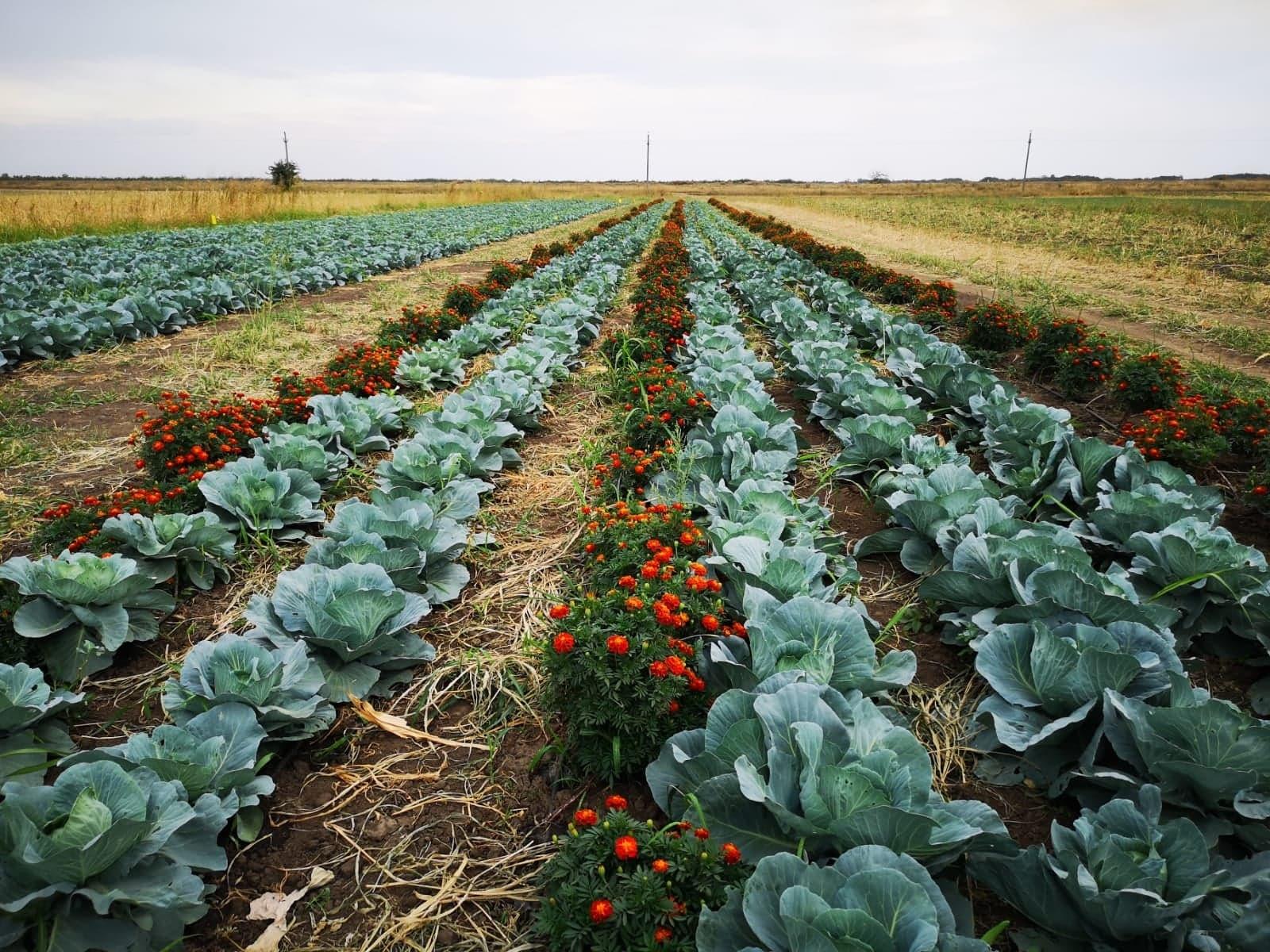 Grădină cu legume eco