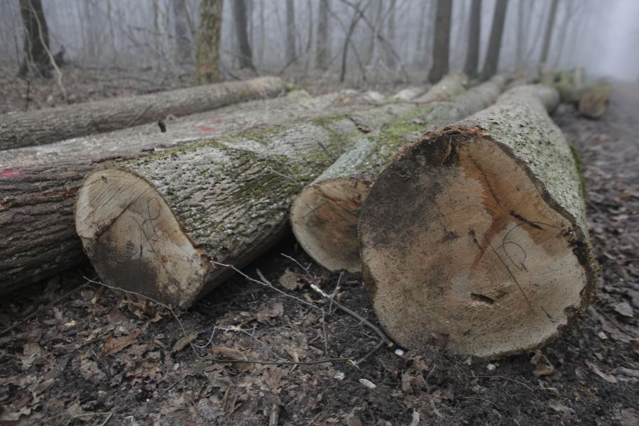 Tăieri de pădure