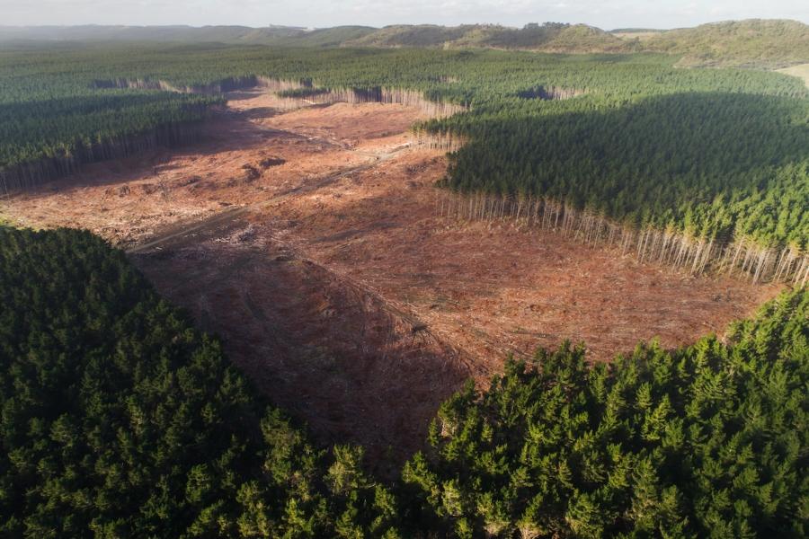 Pădure, despădurire