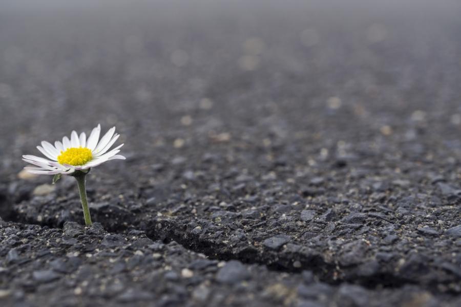 Floare-n asfalt