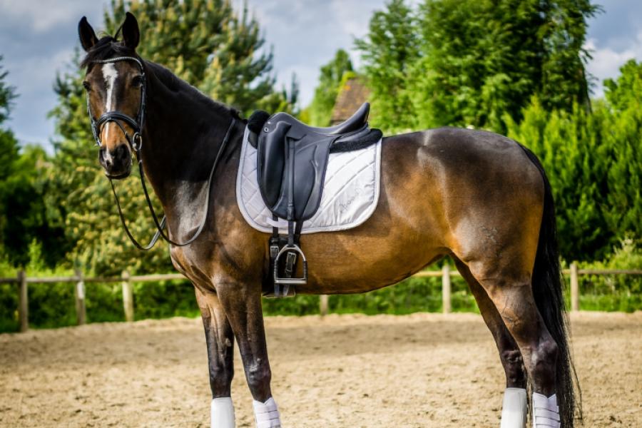 Cal fără călăreț
