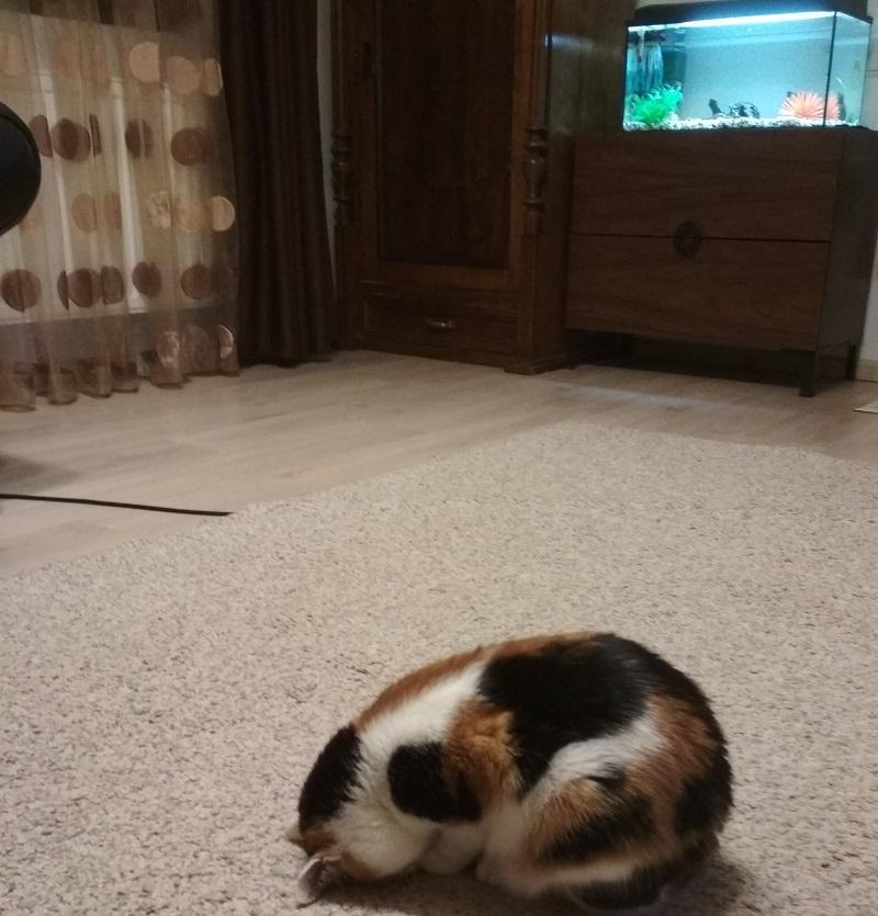 pisica -