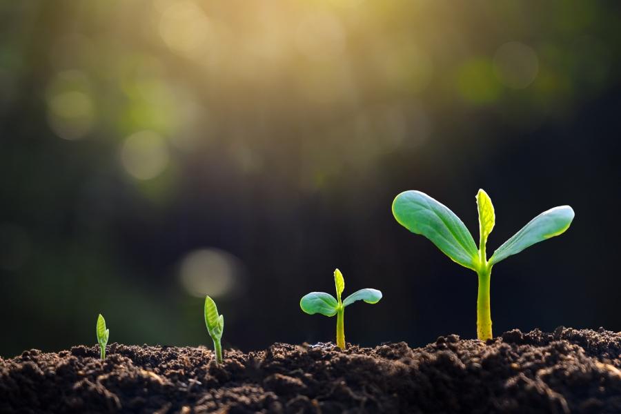 Plante crescând