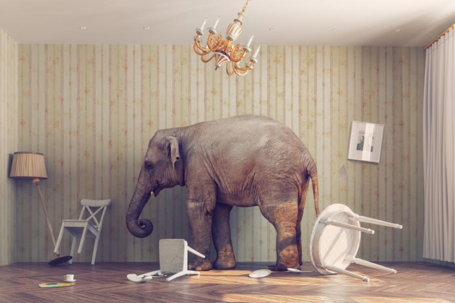 Elefant în interior